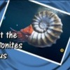 What ammonites tell us